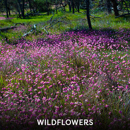 Where the Wildflowers Are