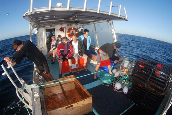 Eco Abrolhos Cruises - Eco Cray Poy Pull (3)