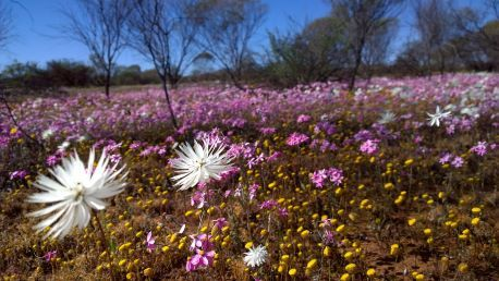 City launches Wildflower Campaign